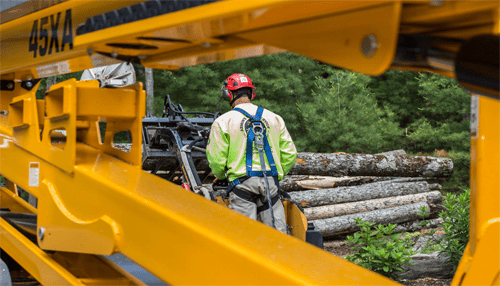 Why Hire An Arborist?