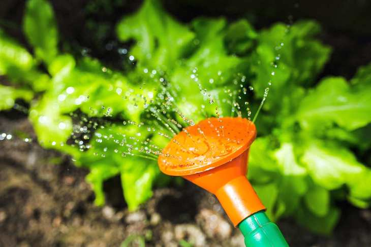 Watering plants with watering can | Plants And Alkaline Water | why do plants need water