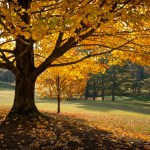 Great Summer Water Ionizer Tips to Take into Autumn!