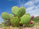 Water Technology –  Do Cacti Have the Answers?