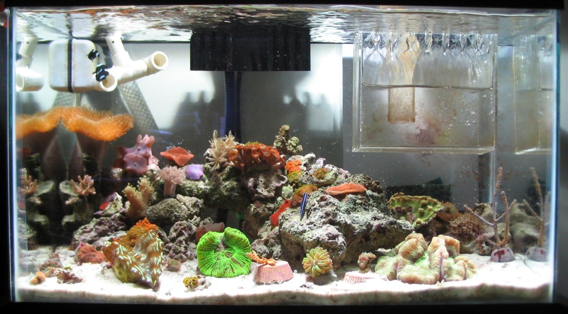 10g Reef Saltwater Aquarium Tyler Merrick