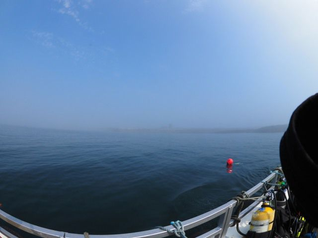 Farnes in the fog