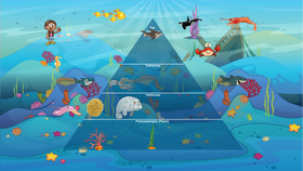 Project Preview For Ocean Ecological Pyramid