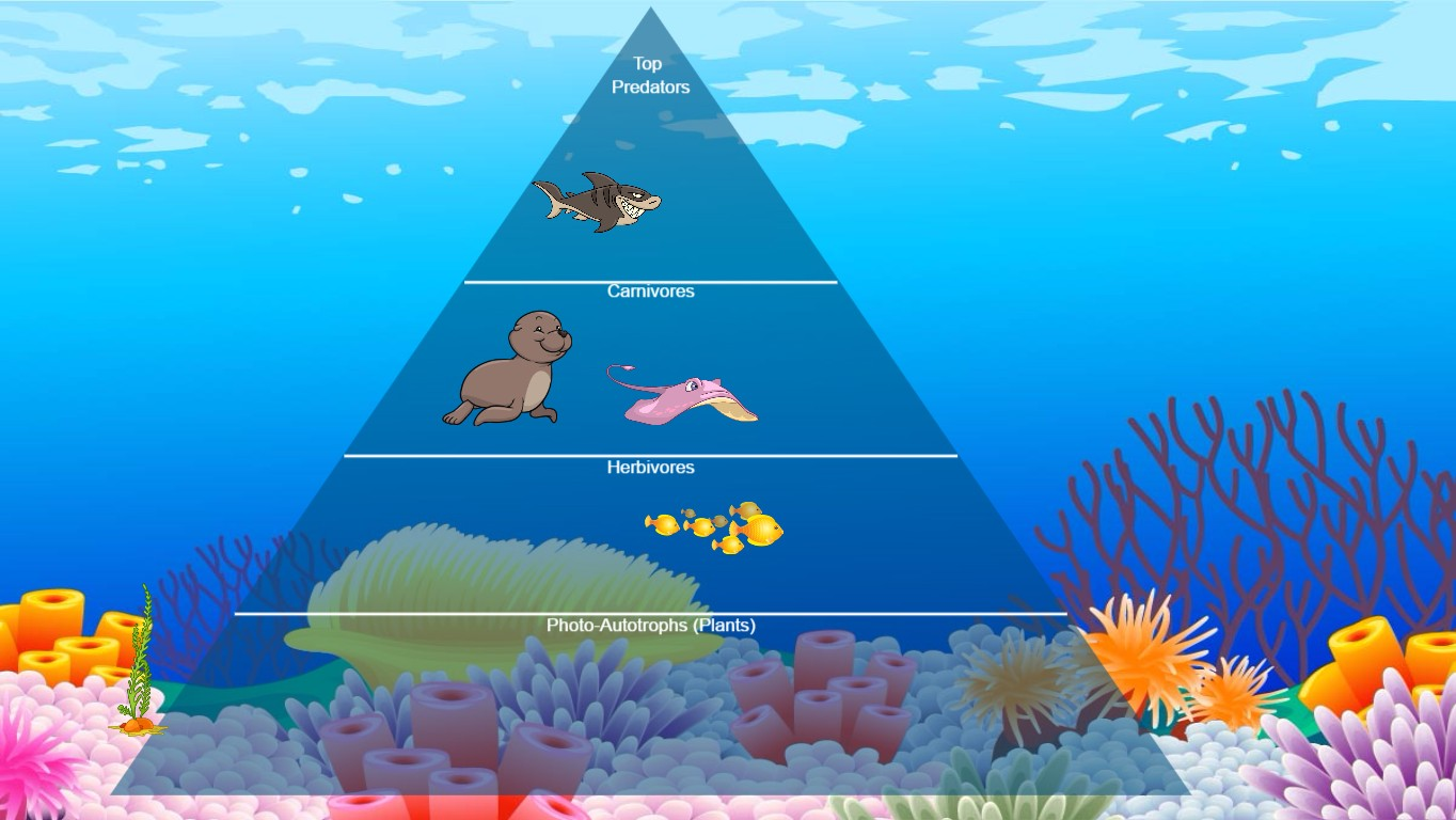 Ocean Food Chain Pyramid