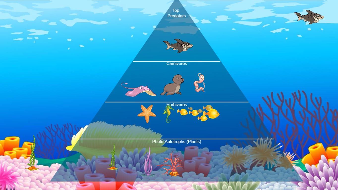 Ocean Food Chain Pyramid