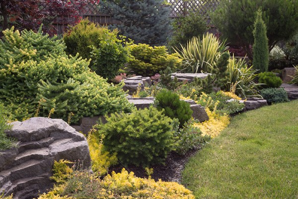 evergreen shrubs modern accents