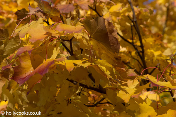 Holly-cooks-autumn-leaves