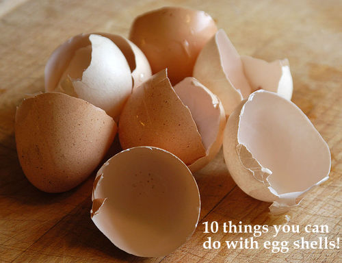 Can You Give Your Dog Eggshells