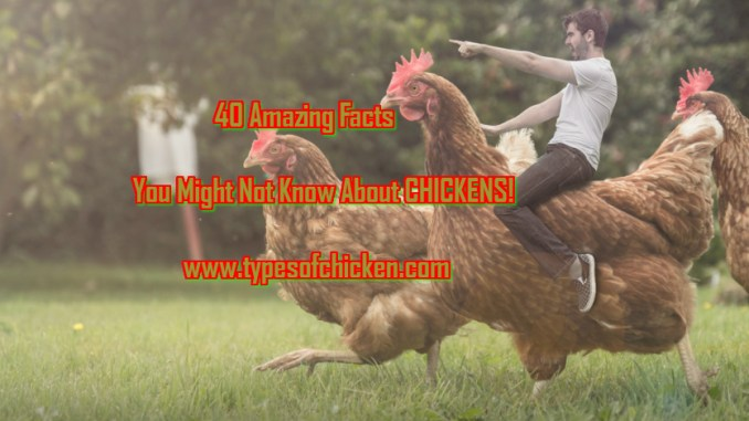 40 Amazing Facts You Might Not Know About CHICKENS!