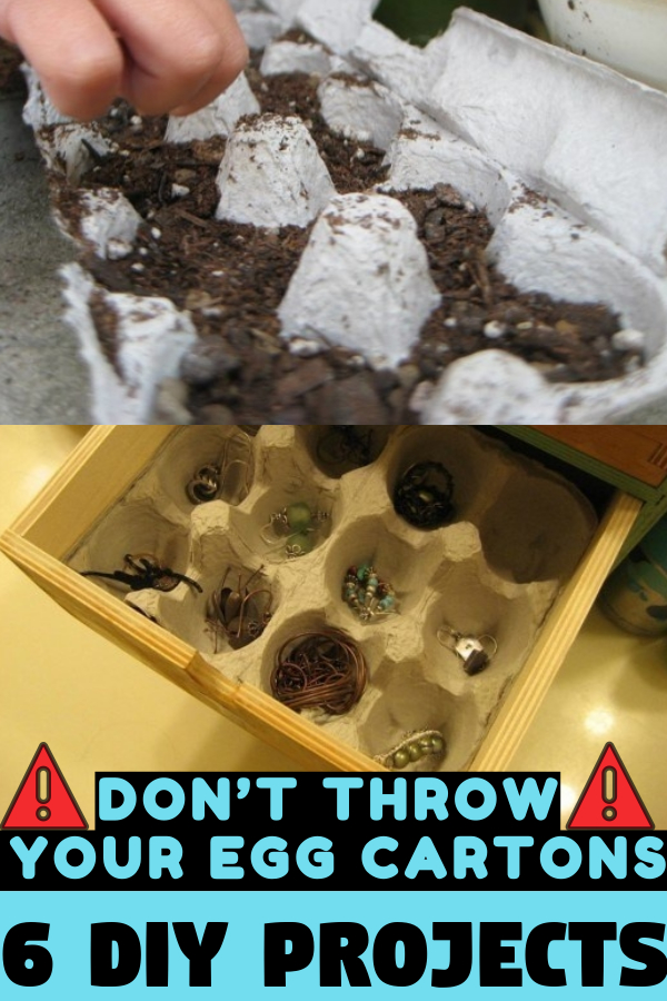 Don't Throw Your Egg Cartons Anymore! 6 DIY Projects