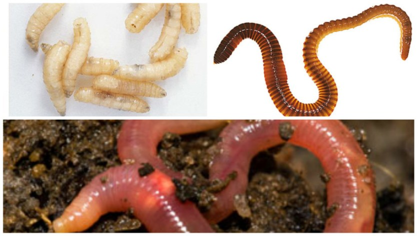 worms, maggots and earthworms
