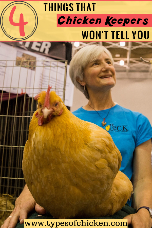 Carol Bartram and her hen offering advice for owning chickens