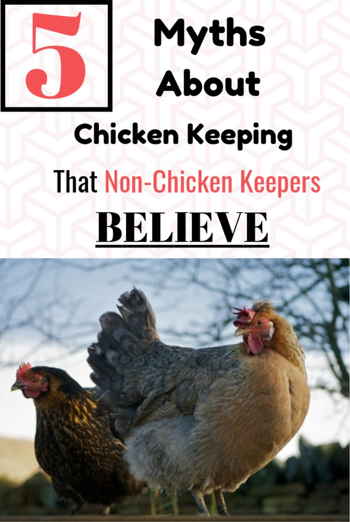 Chicken Keeping