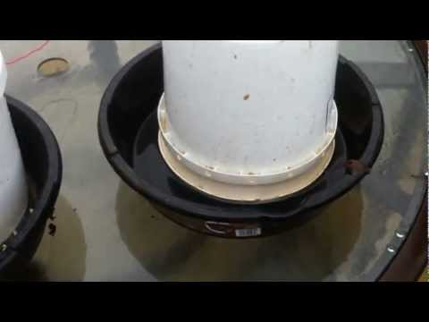 How To Keep Mice Out Of Dog Food Bowl