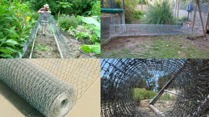 How to build chicken tunel