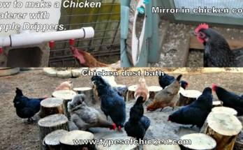 Improve Your Chicken Coop