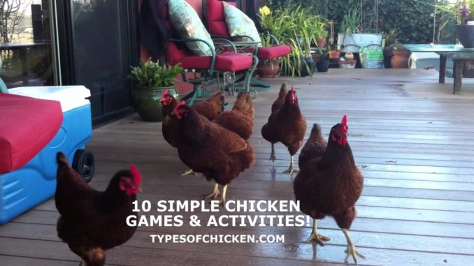 chicken games