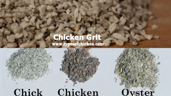 Chicken Grit