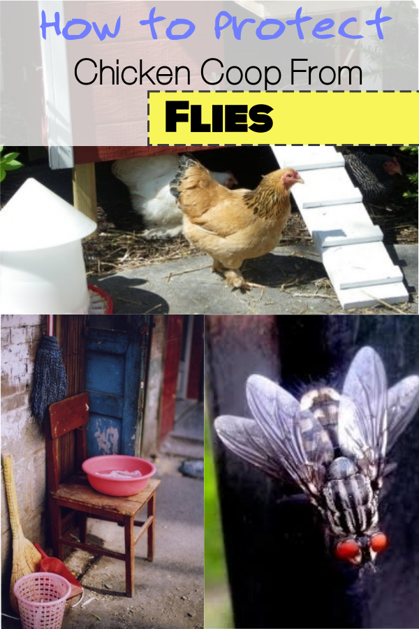 How to Protect Your Chicken Coop From Flies!