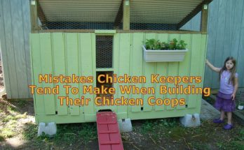 Mistakes Chicken Keepers Tend To Make
