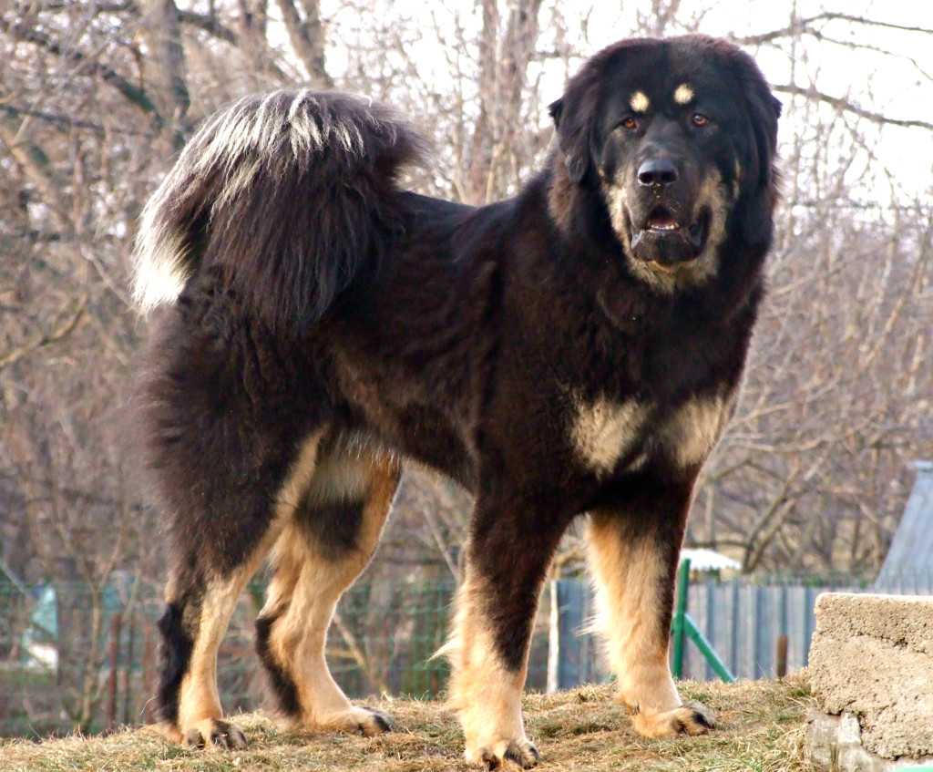 What Breeds Make Good Guard Dogs