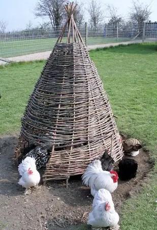 chicken coop hal