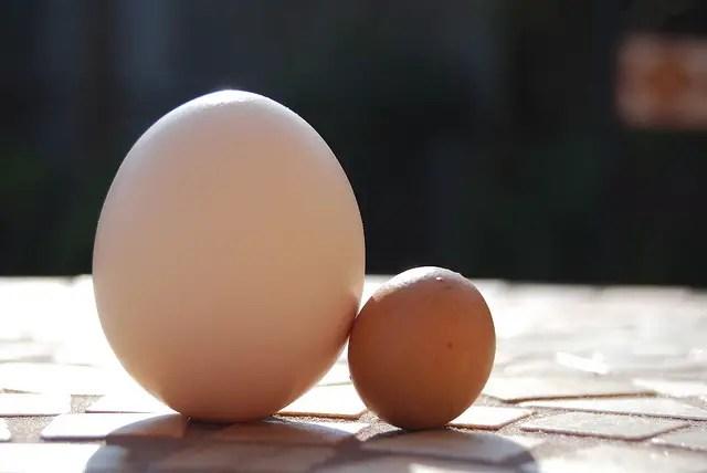 Fart Eggs