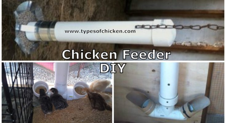 How To Make Your Own Chicken Feeder