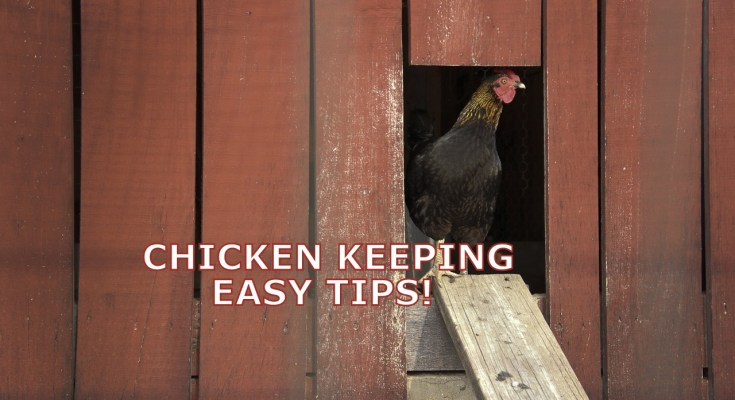 Life As A Chicken Keeper