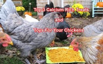 Calcium Rich Treats