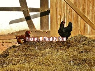 Fixing A Muddy Run