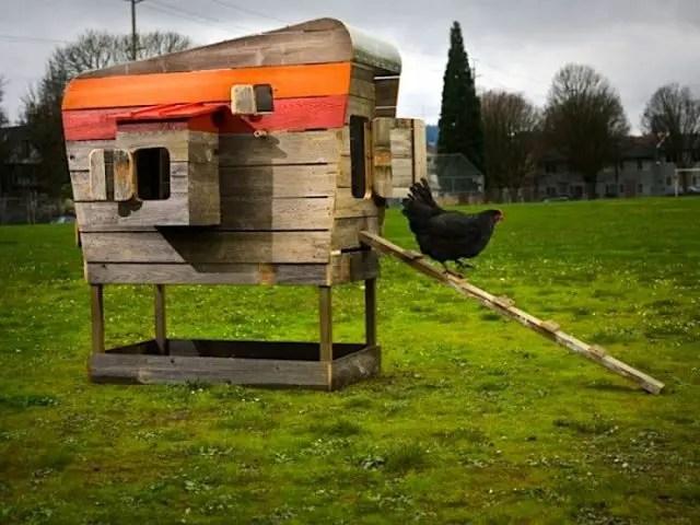 urban-chicken-coop-3-640×480