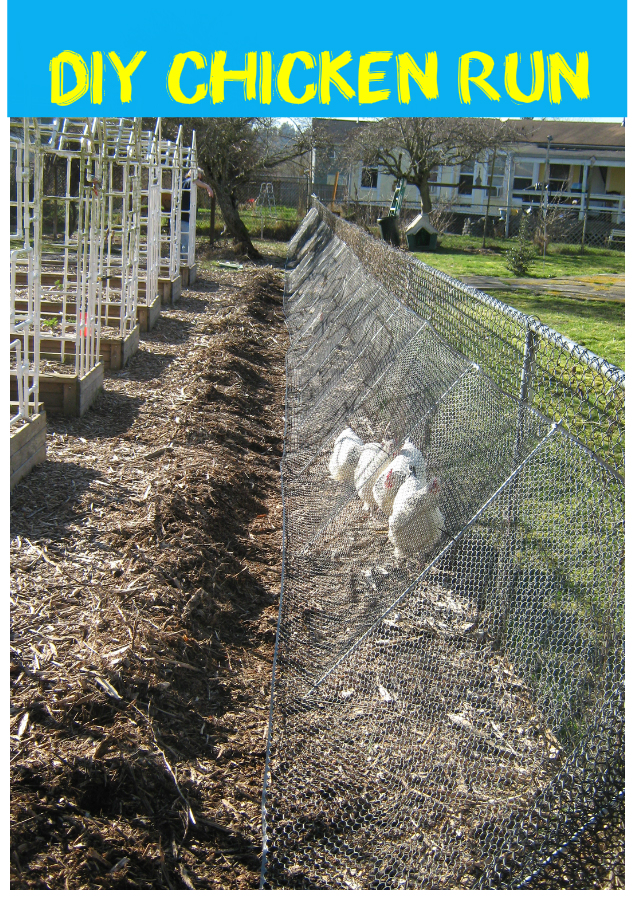 This Amazing DIY CHICKEN RUN is what your backyard needs!
