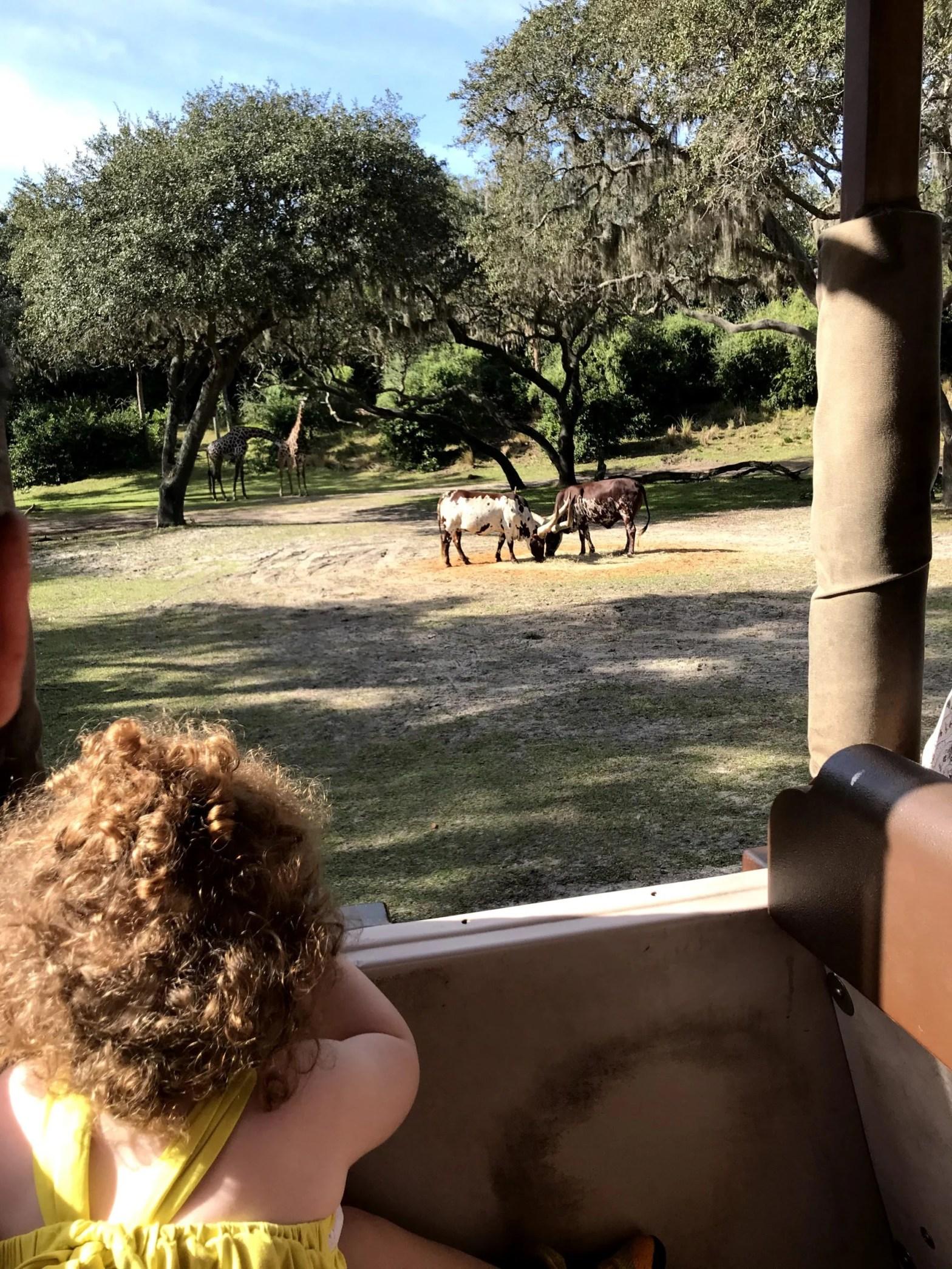 Disney Safari at Animal Kingdom