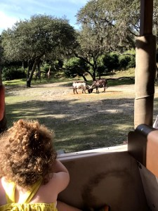 Disney Safari at Animal Kingdom
