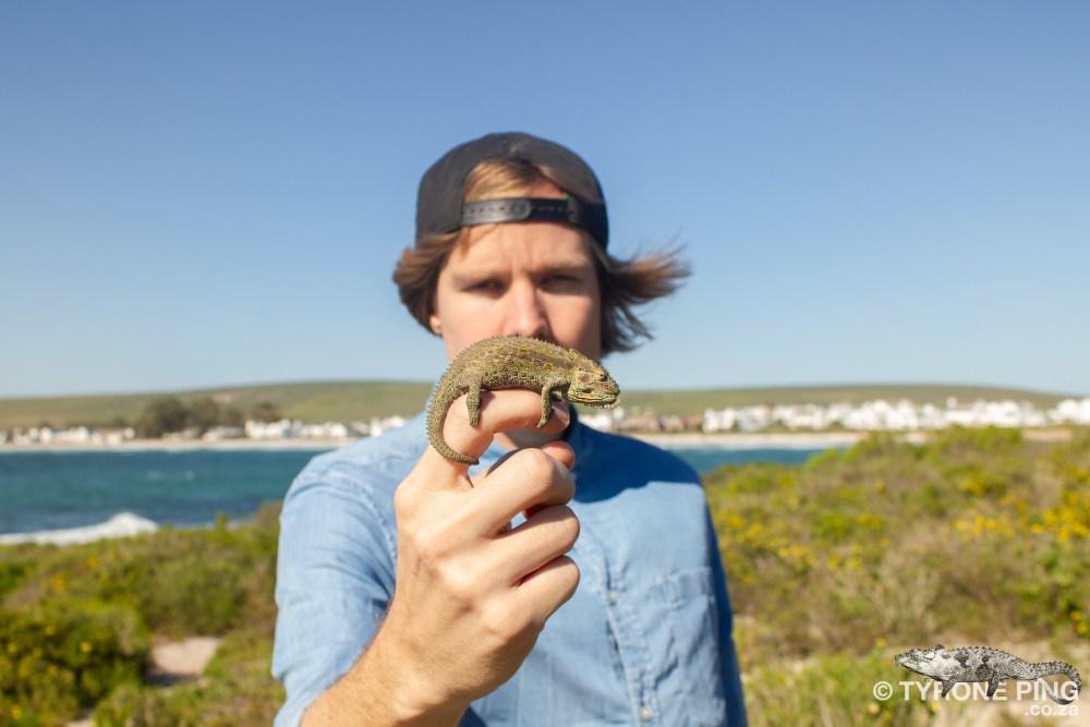 Braydpodion occidentale | Western Dwarf Chameleon | Tyrone Ping