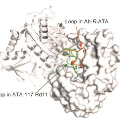 how an important enzyme used in drug production recognizes its substrate increased use of enzymes producing chiral amines [ 1446 x 1204 Pixel ]