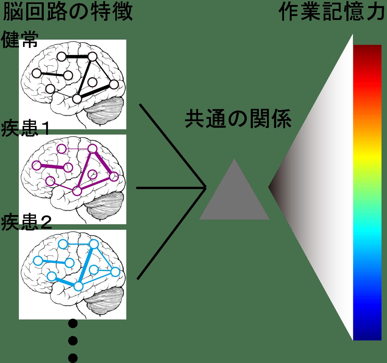 健常者と複數の精神疾患の記憶力に共通のモデル | 東京大學