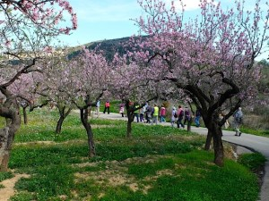 Healthy Walking - Benitachell - Around the country paths and camis from Les Fonts I (Feb Blossom walk) @ The centre of Les Fonts Urbanisation.