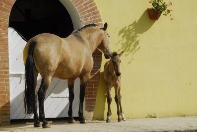 Stage per la morfologia del cavallo PRE presso la Yeguada Effatà, tenuto da dom Joachin Vela Velasquez
