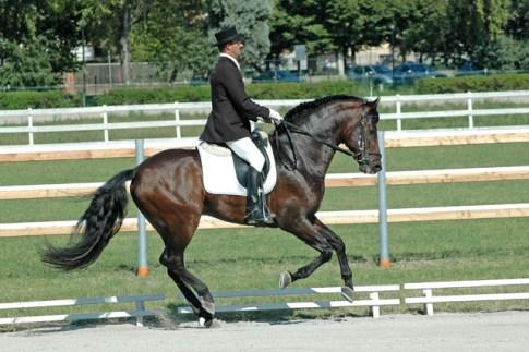 """Settima edizione de """"i cavalli del Re"""", ippodromo di Ferrara"""
