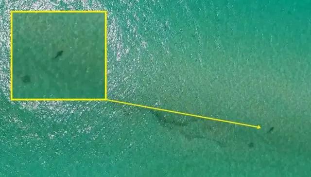 sentinel-shark-detection-drone