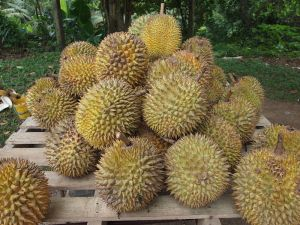 """Durian"" by Kalai - Own work. Licensed under CC BY-SA 3.0 via Wikimedia Commons - http://commons.wikimedia.org/wiki/File:Durian.jpg#/media/File:Durian.jpg"