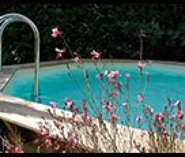 They Are Distributor Of Following Brands Nature For The Garden Ubbink For Ponds And Pools Infinitespa For Spas And Akanua For Outdoor Lighting