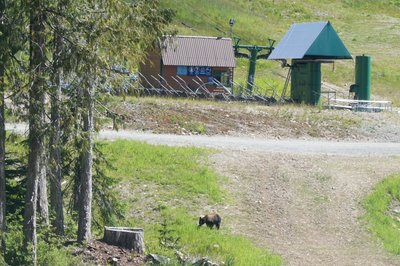 The bear we saw with the ski area behind