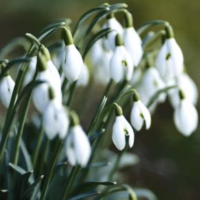 5 Books to Rejuvenate Your Reading List for the Springtime