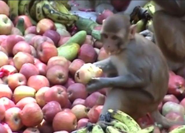 macaque-internet
