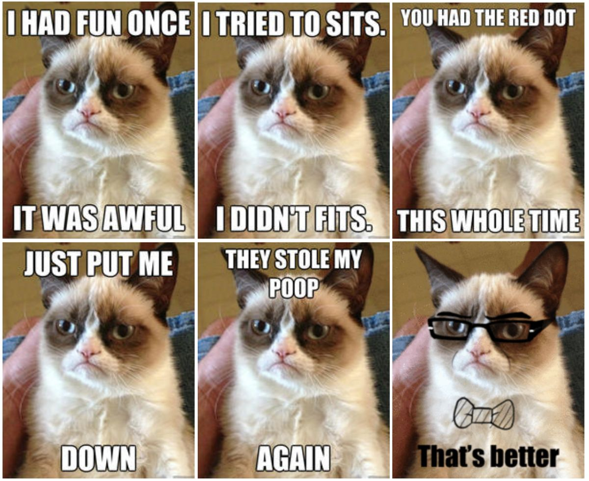 'Grumpy Cat', One Of The Internet's Most Popular Memes ...