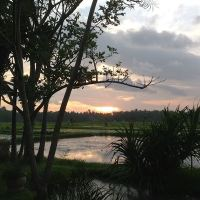 Bali Gathering Sunset Dinner & Single Electone Half Day