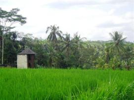 Ubud land sale